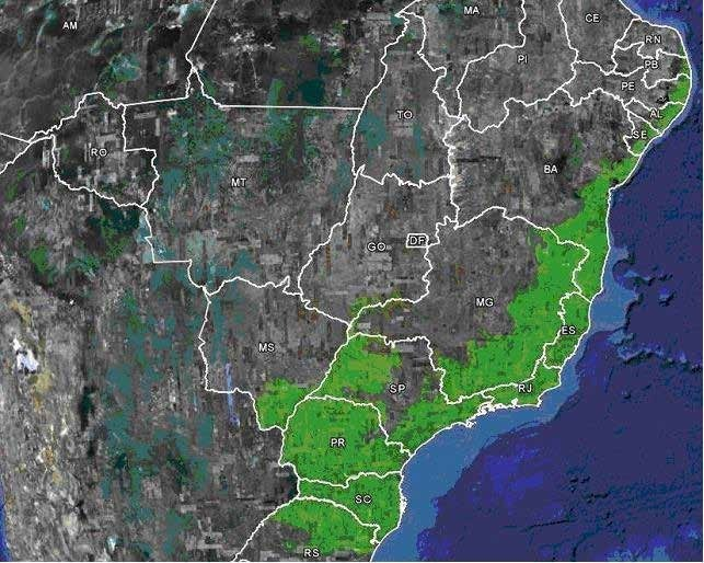 CAMINHADA MATA ATLÂNTICA - RJ - BRASIL
